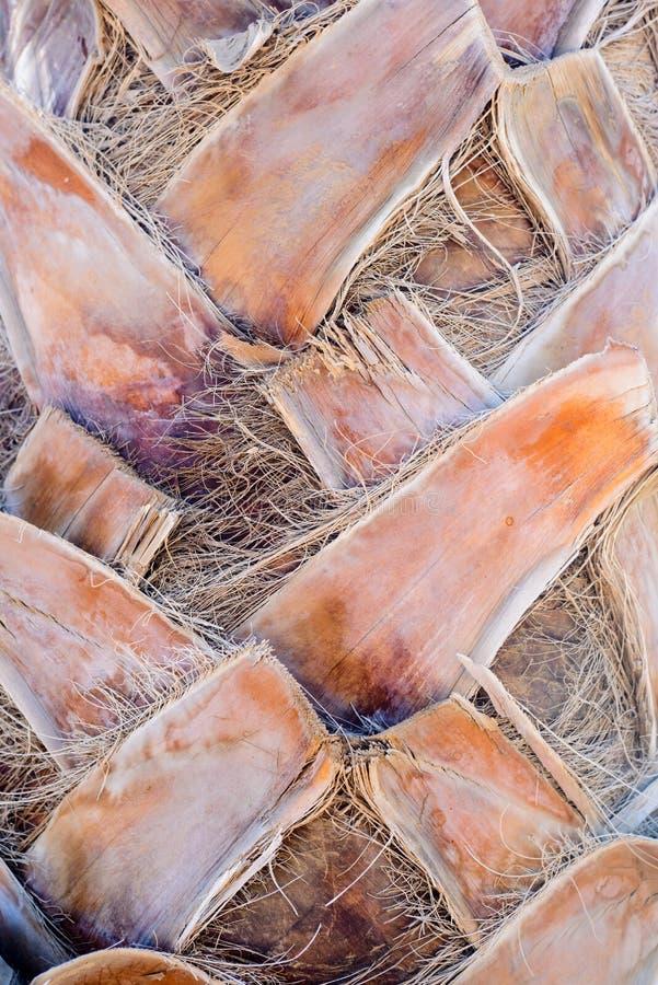 关闭棕榈树的树干 库存图片