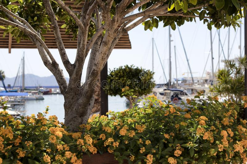 关闭橙色花和一棵树与小船在背景中 免版税库存照片