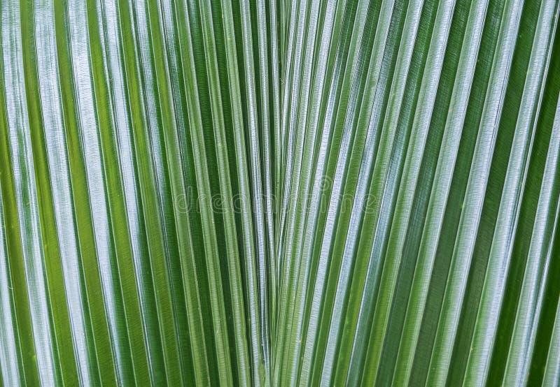 关闭深绿棕榈叶在有作为自然背景纹理或模板使用的抽象线和阳光树荫的森林里 免版税库存图片