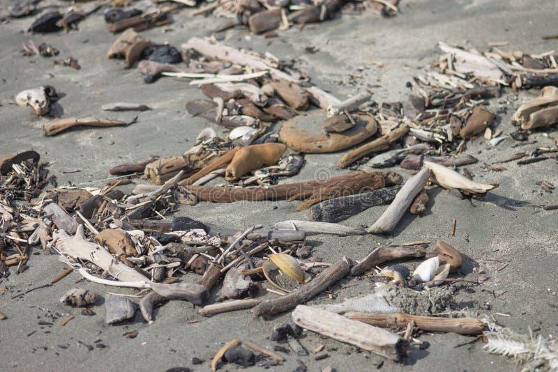 关闭漂流木头的图象在一个沙滩的 库存图片