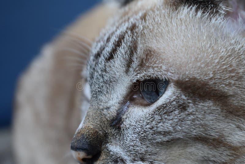 关闭猫眼 库存图片