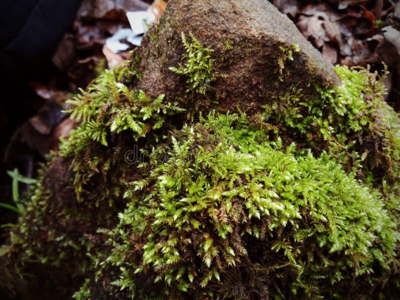 关闭生苔岩石有被弄脏的背景 免版税图库摄影