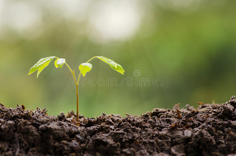 关闭生长与雨水下落的年幼植物 免版税库存图片