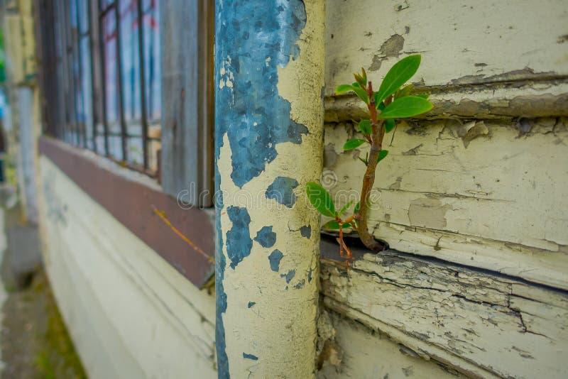 关闭生长从一个木墙壁结构大厦的小植物选择聚焦位于巴拉斯港  免版税库存图片