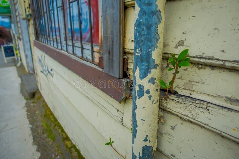 关闭生长从一个木墙壁结构大厦的小植物选择聚焦位于巴拉斯港  库存图片