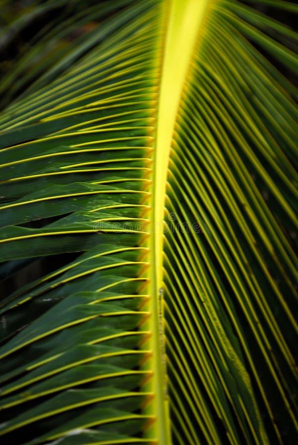 关闭留下棕榈树  免版税库存照片