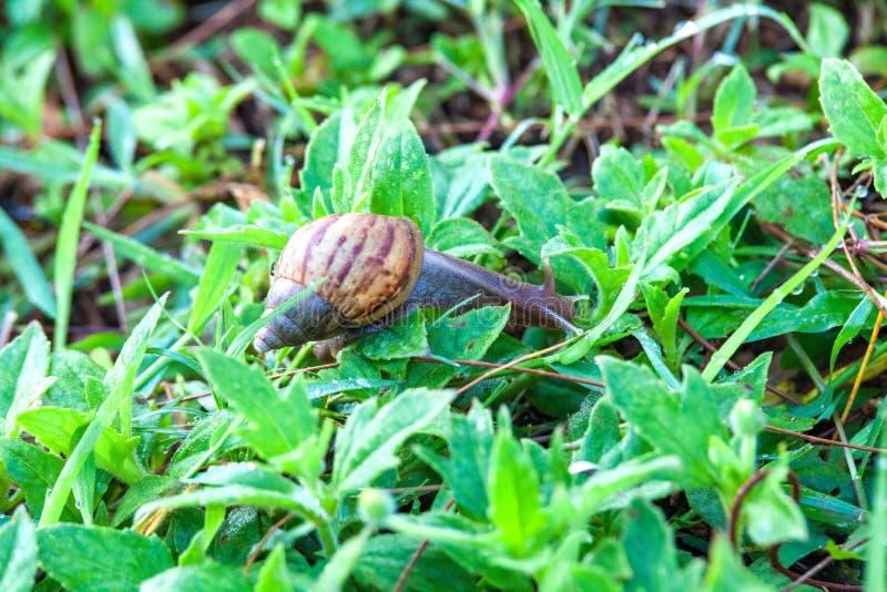 关闭真正的象形在绿草蜗牛大顶部无图片
