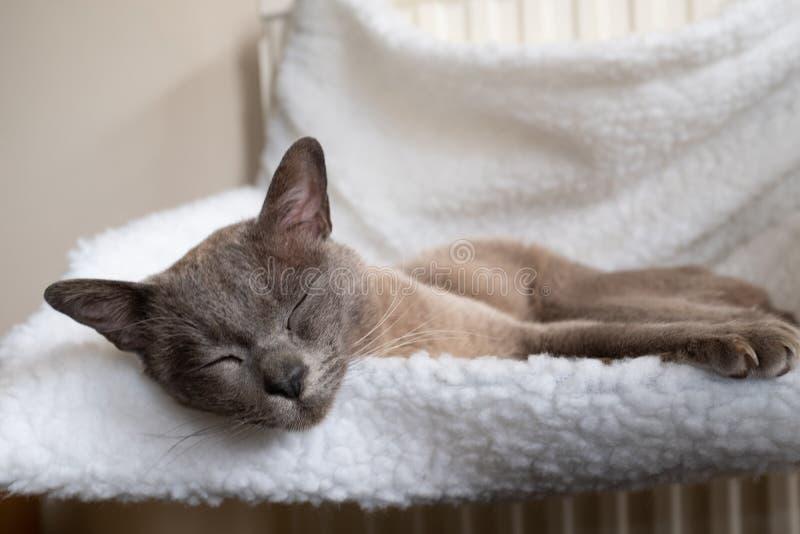 关闭睡觉在一个小白色吊床的一只美丽的家猫附在幅射器 免版税库存图片
