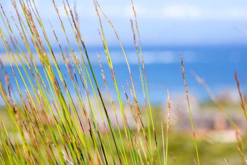 关闭移动与海洋和茅屋顶村庄的风的绿色reet草在背景中在寂静的海湾 免版税库存照片