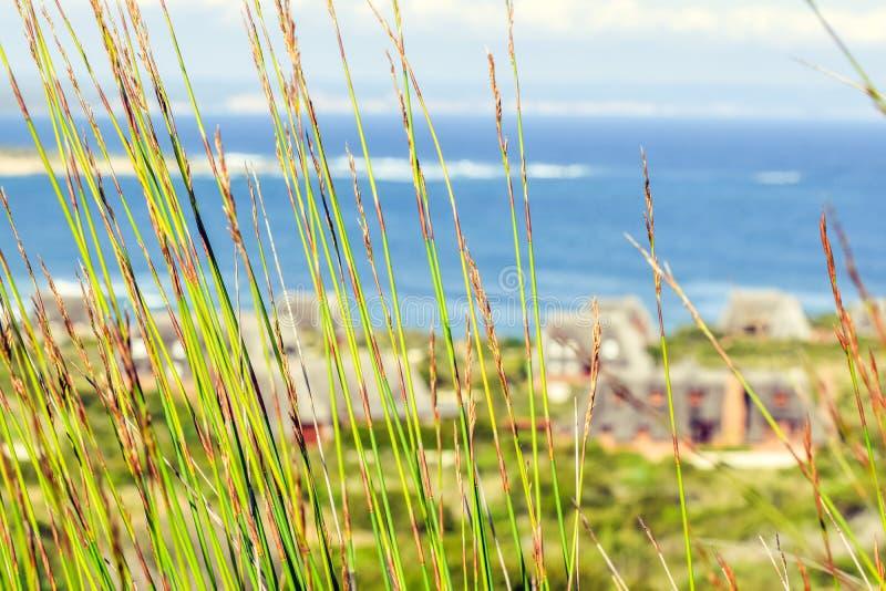 关闭移动与海洋和茅屋顶村庄的风的绿色reet草在背景中在寂静的海湾 库存照片