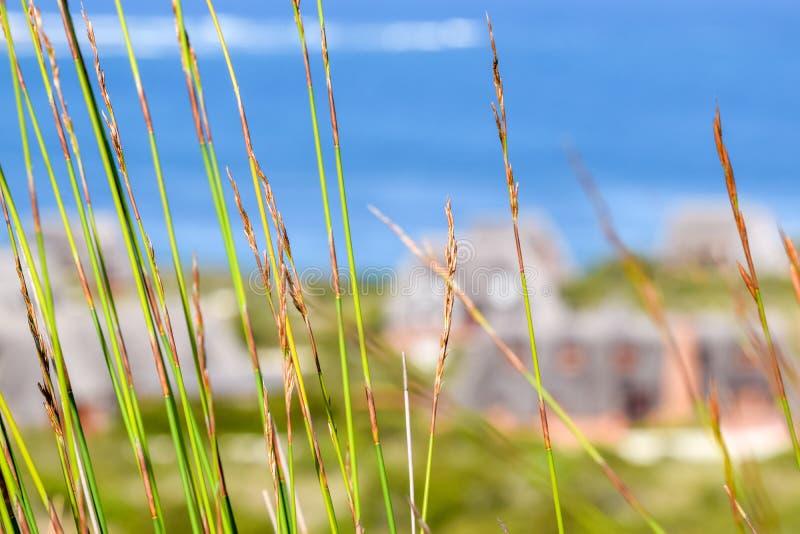 关闭移动与海洋和茅屋顶村庄的风的绿色reet草在背景中在寂静的海湾 库存图片