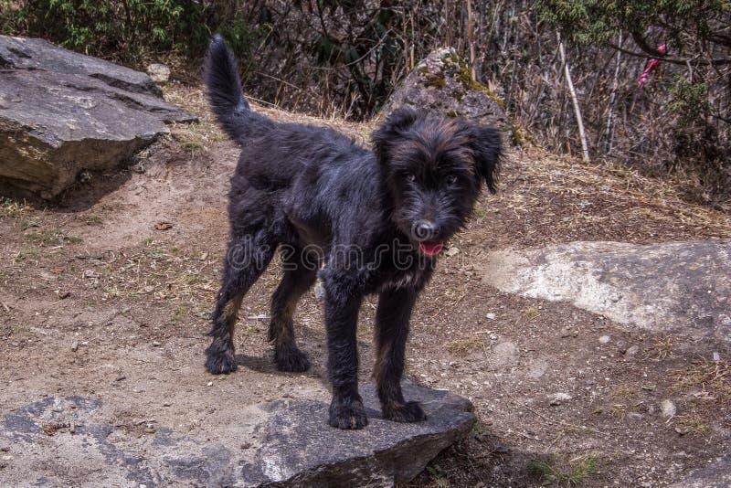 关闭站立在岩石的观点的一条黑小狗 Sagarma 免版税库存图片