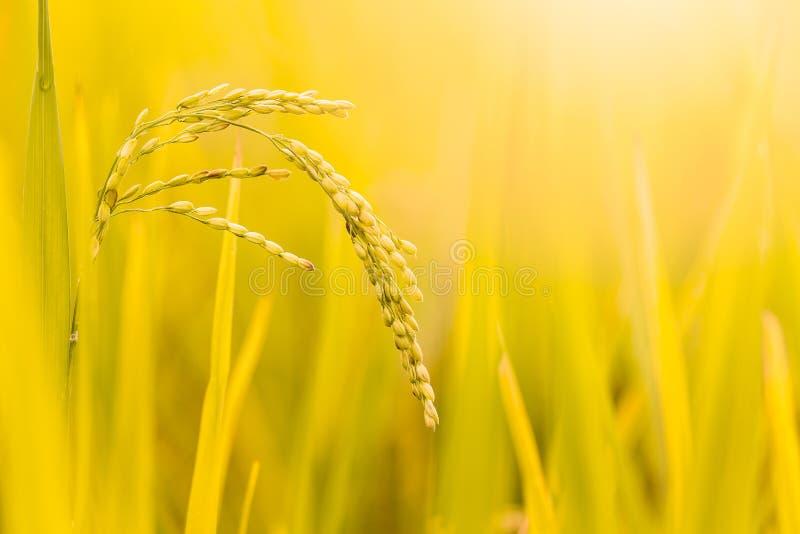 关闭粮食作物和种子 库存照片