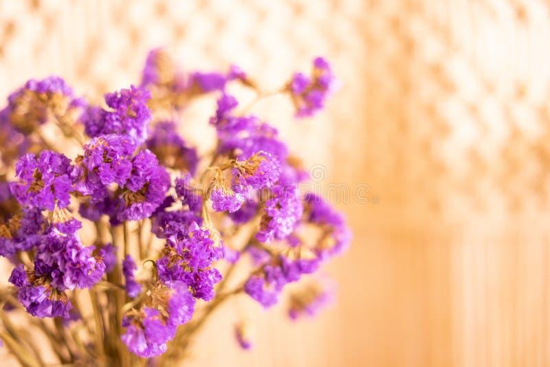 关闭紫罗兰色seafoam statice或补血草属或者匙叶草与拷贝空间 图库摄影