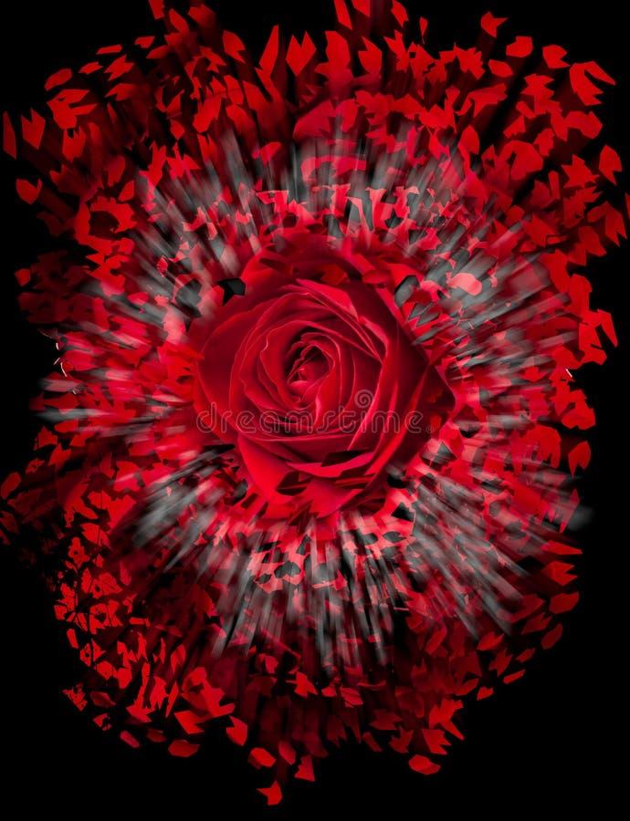 关闭红色玫瑰爆炸 皇族释放例证