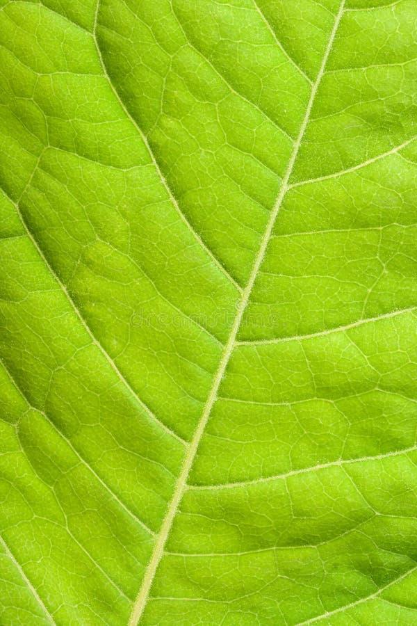 关闭绿色叶子  免版税库存照片