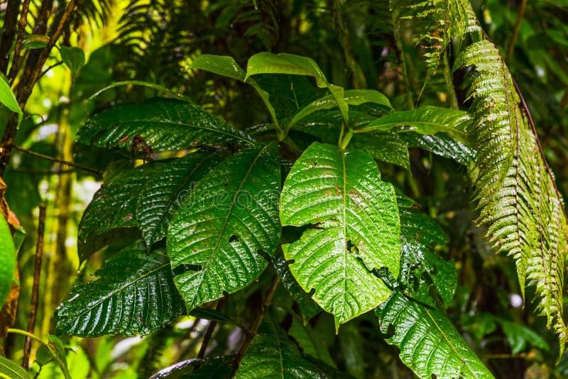 关闭绿色植物在巴斯特尔密林在瓜德罗普 免版税库存图片