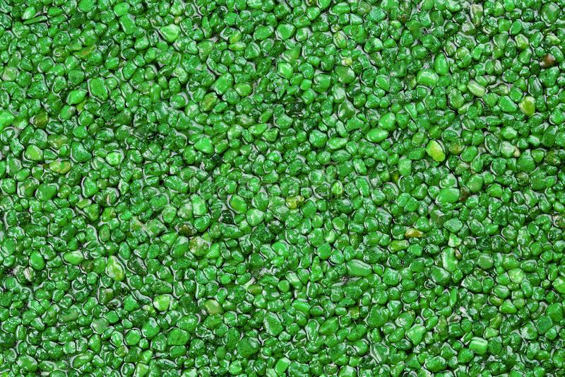 关闭绿色自然石地毯 r 包含自然石头的滑动抗性地板结束 库存图片