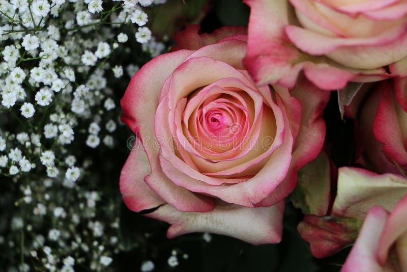 关闭美丽的五颜六色的玫瑰 库存照片