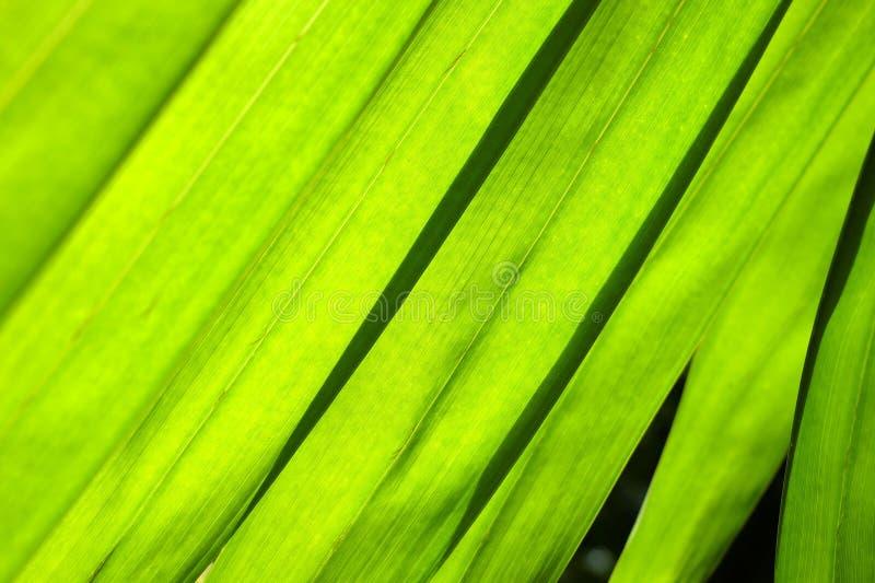 关闭美好的绿色叶子背景 免版税库存照片