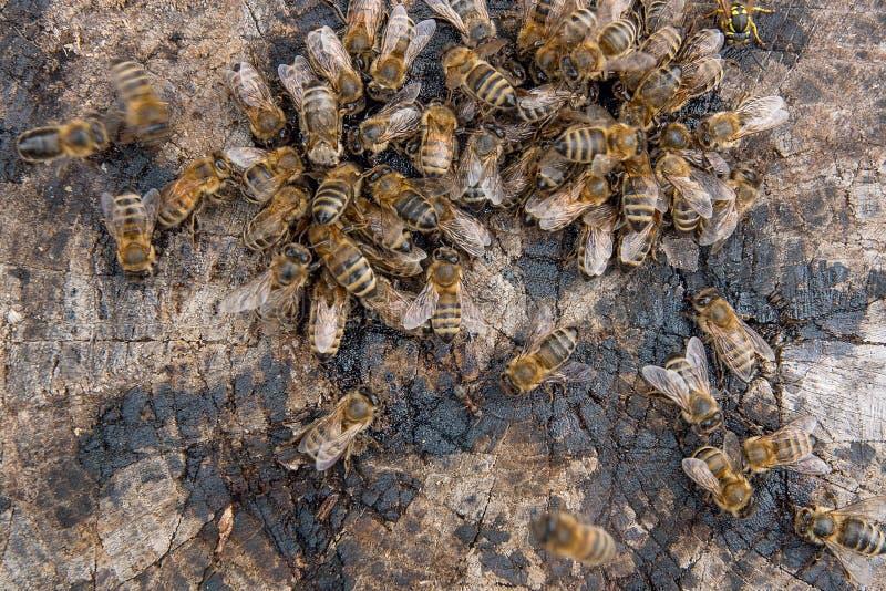 关闭群集在蜂蜜下落的观点的蜂和黄蜂  免版税库存图片