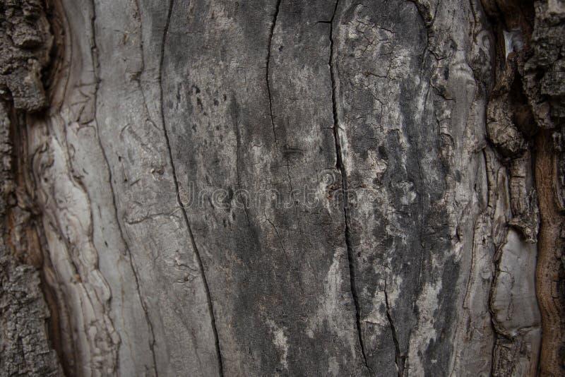 关闭老木纹理背景看法  免版税库存照片
