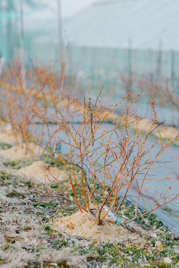 关闭花和菜种子自温室 免版税图库摄影
