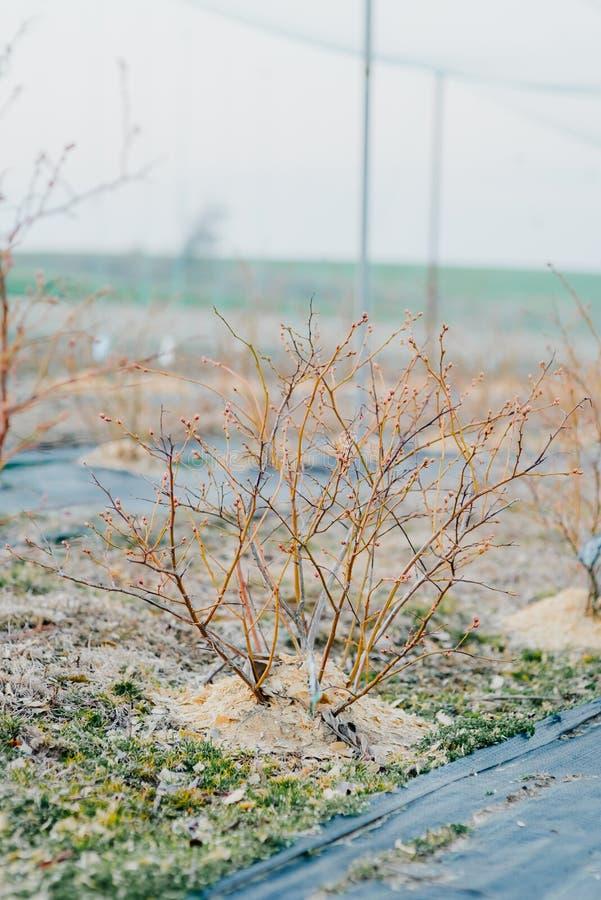 关闭花和菜种子自温室 免版税库存照片