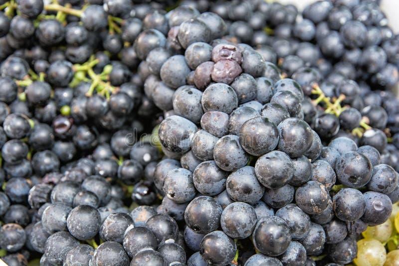 关闭蓝色葡萄照片  免版税库存图片