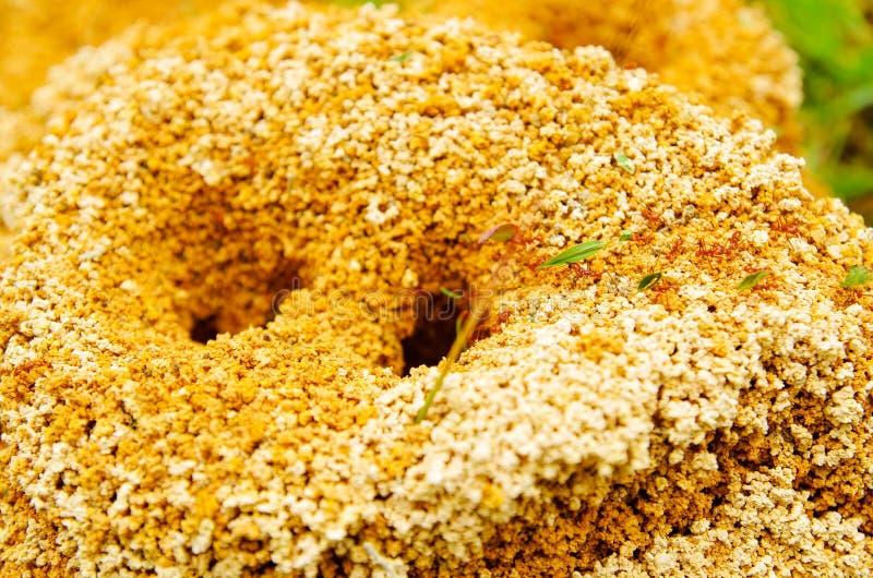 关闭蚁丘在春天森林里,蚂蚁移动蚁丘 叶子运载的小片断他们的 免版税图库摄影