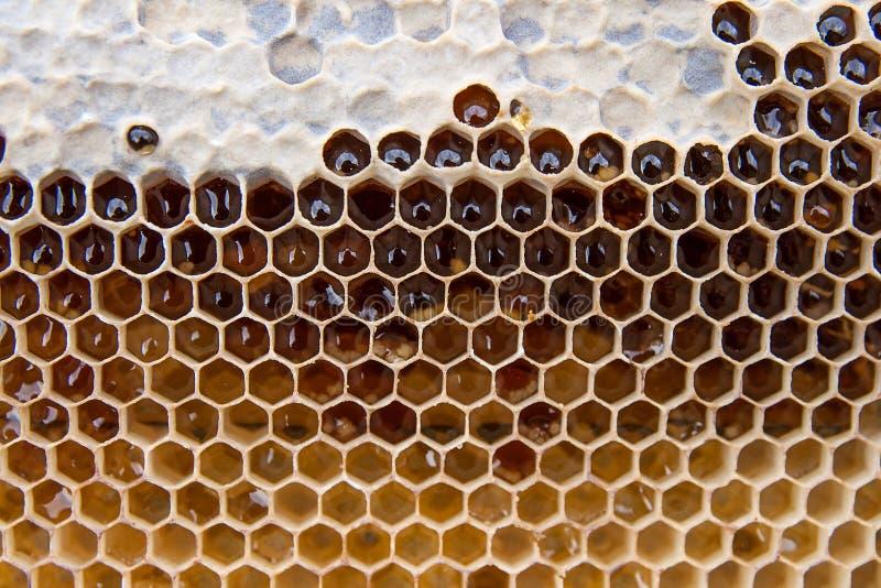 关闭蜂窝看法用甜蜂蜜 黄色蜂窝片断用作为背景的甜蜂蜜 免版税库存照片
