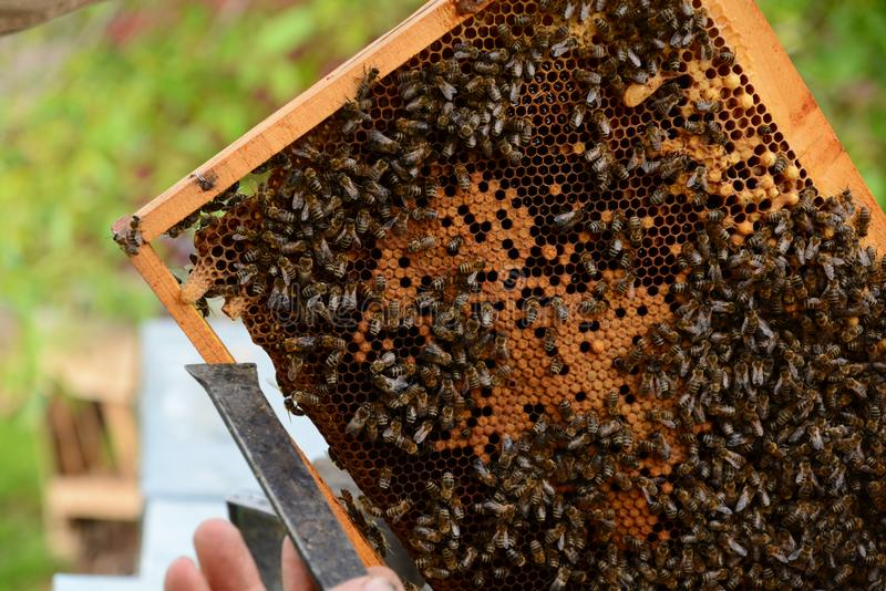 关闭蜂蜂房 免版税库存图片