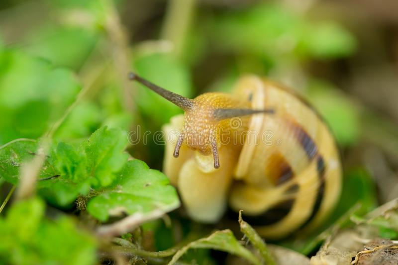 关闭蜗牛宏指令在绿色叶子的 库存图片