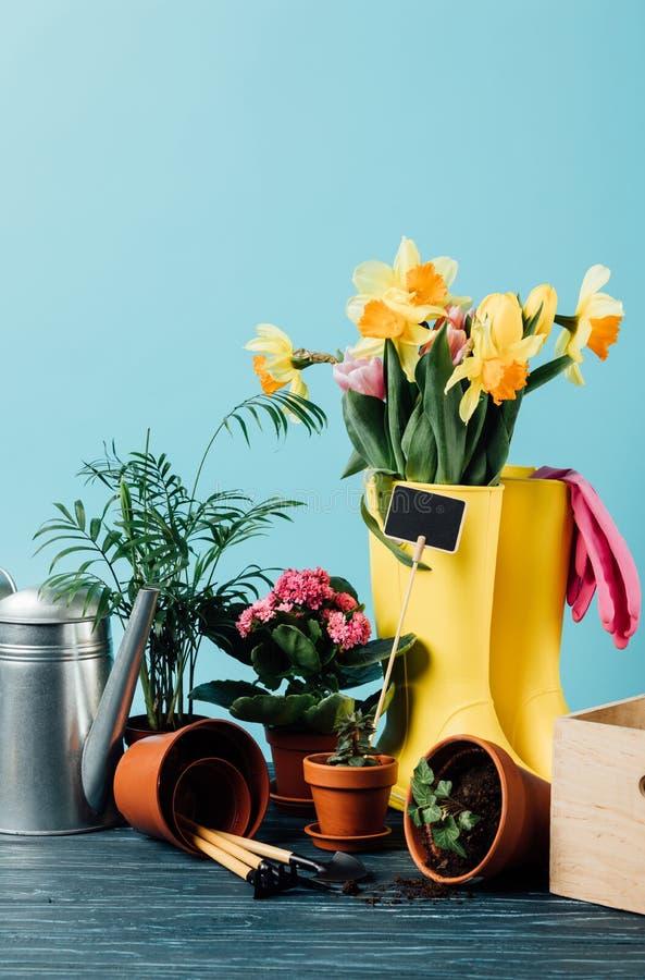 关闭被安排的胶靴看法有花、花盆、园艺工具和喷壶的在木桌面 免版税图库摄影