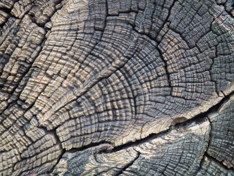 关闭被构造的美丽的裁减树桩 图库摄影