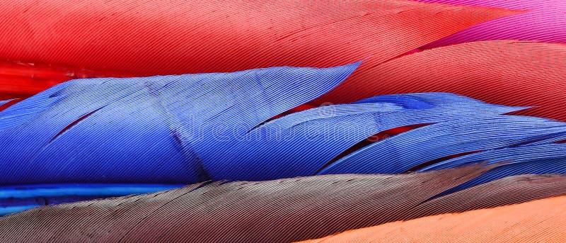 关闭软的五颜六色的羽毛 免版税库存照片