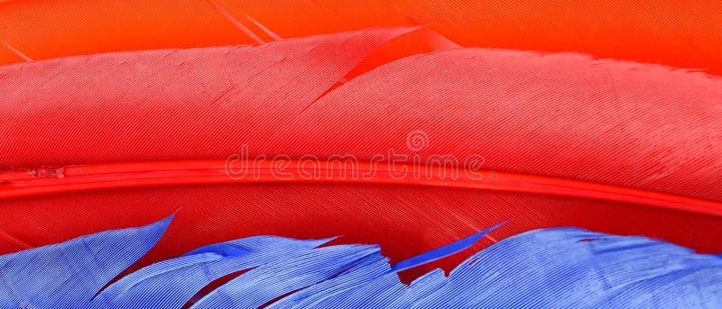 关闭软的五颜六色的羽毛f 免版税图库摄影