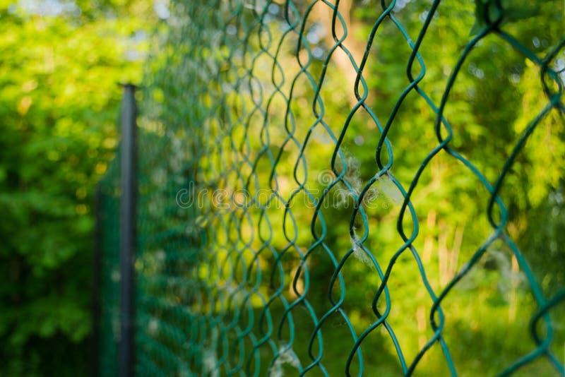 关闭金属链子链接在庭院里 金刚石滤网在被弄脏的绿色背景的铁丝网 铁滤栅网在夏天 免版税库存照片