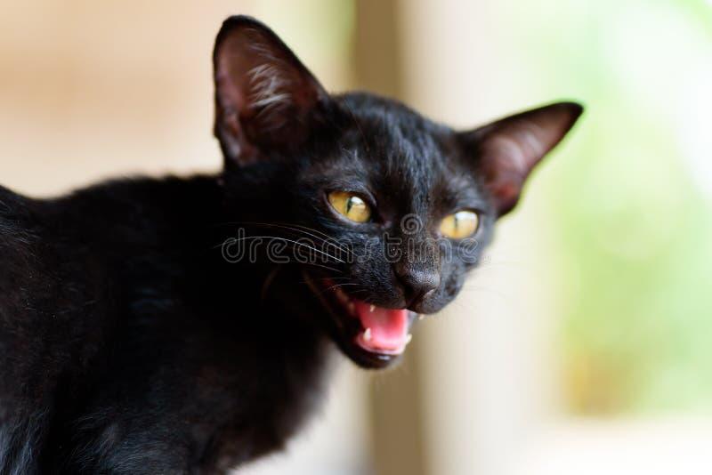 关闭黑小猫面孔开放嘴 库存图片