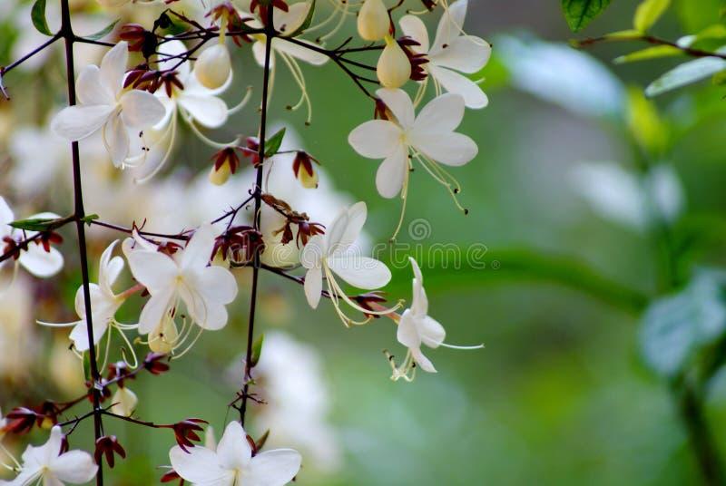 关闭,并且美丽的白花的选择聚焦图片与花粉的在分支在早晨风景开花 免版税库存照片
