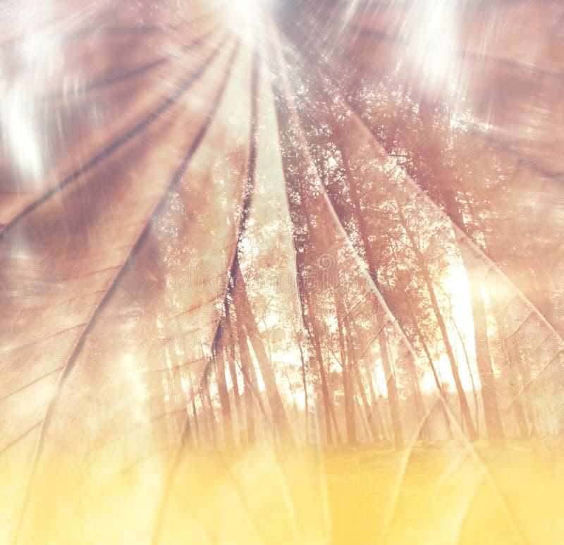 关闭织地不很细棕色叶子明亮的bokeh光 梦想的概念 双重expousure作用 库存图片