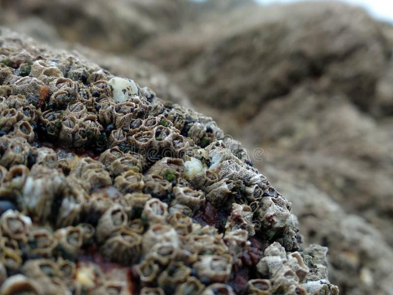 关闭/宏指令在岩石的眼镜与浅景深 图库摄影