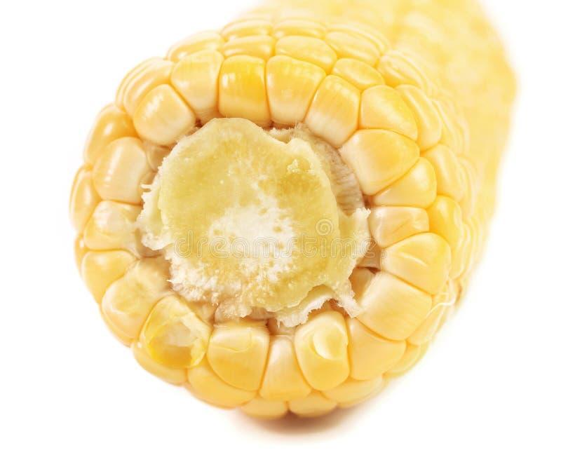 关闭黄色玉米棒子 库存照片