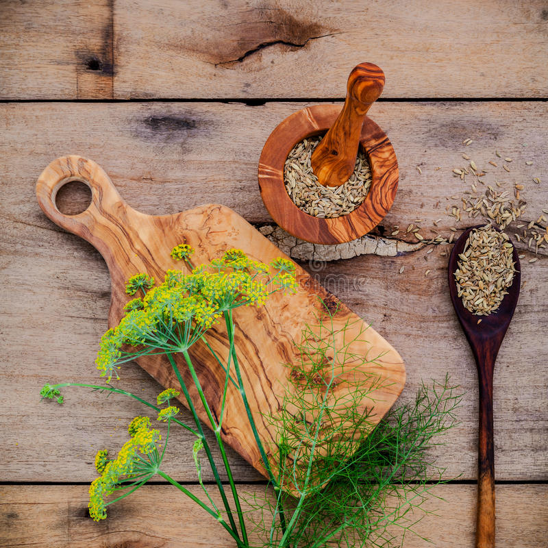 关闭茴香和干茴香籽进展的分支在r 免版税库存图片