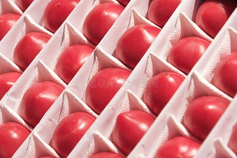 ?? 其中每一在甚而行的一个分开的细胞在抽屉成熟蕃茄的看法  库存照片