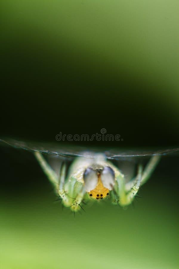 其蜘蛛网 库存照片