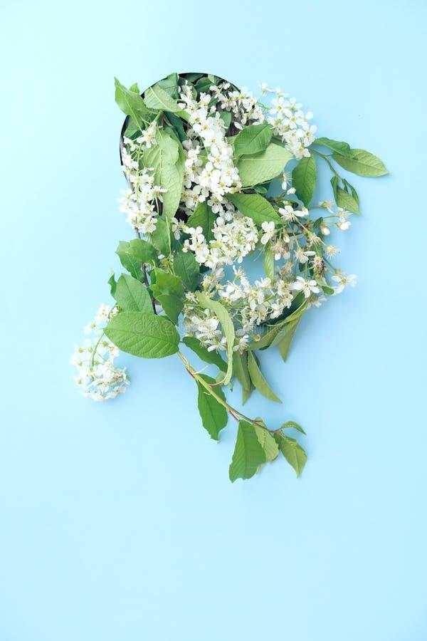 具有美丽白色花枝的春边背景 粉粉色背景,花朵绚丽 春天 免版税图库摄影