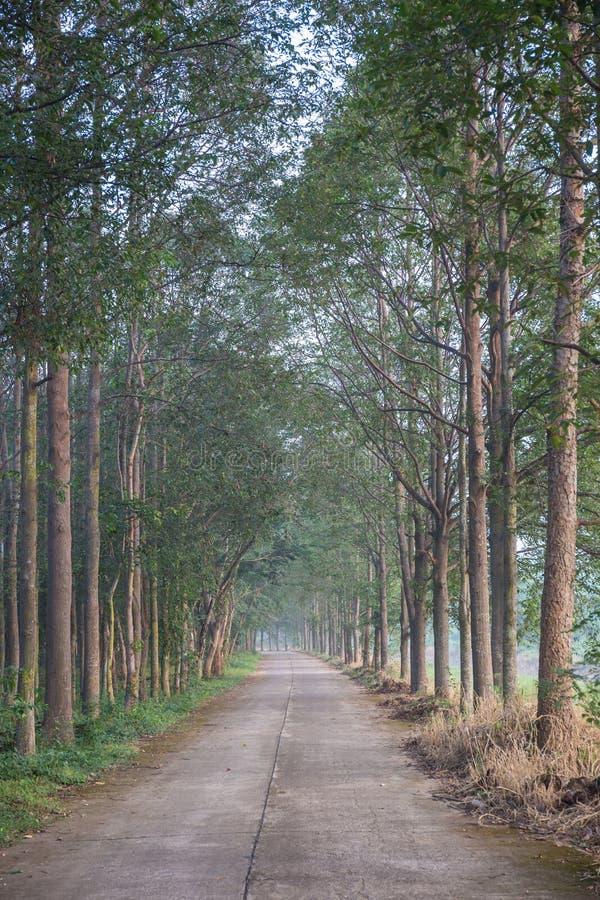 具球果东欧森林路径乌克兰木头 免版税图库摄影