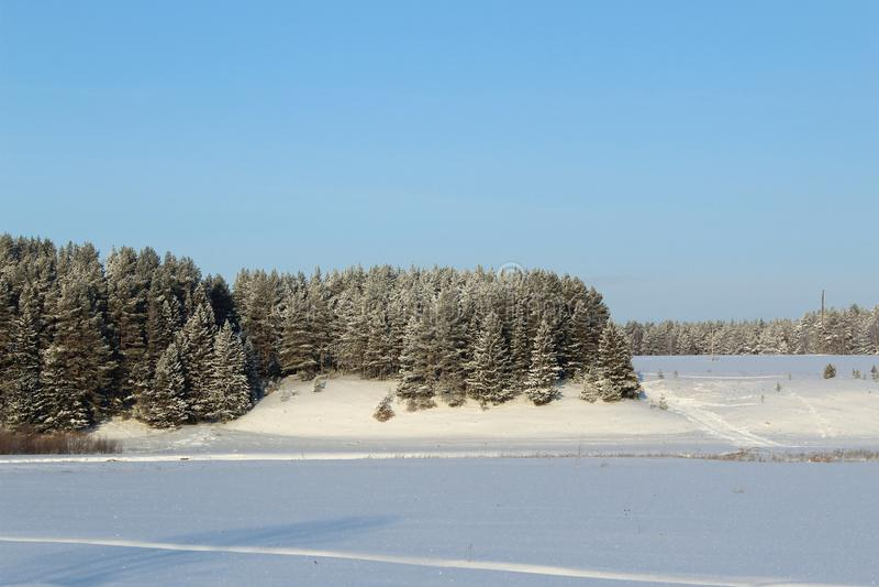 具球果森林和领域在雪下在一好日子 免版税图库摄影