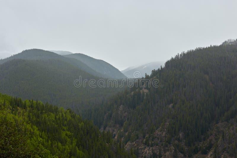 具球果森林风景山小山的 免版税库存图片